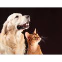 Akcesoria dla zwierząt